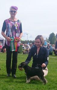 Deli winning BEST OF BREED in Vännäs (Sweden) International Dog Show 2017 under breed specialist Nina Karlsdotter.