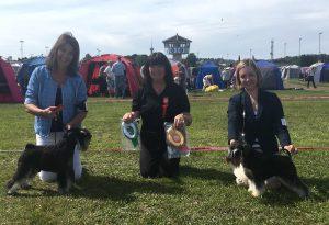 Deli winning BEST OF BREED of Trondheim (Norway) International Dog Show 2017